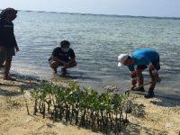 Mangrove Community Jakarta Melakukan Aksi Tanam 1000 Mangrove