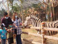 Royal Safari Garden Liburan Dengan Edukasi Satwa